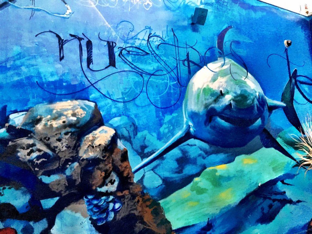Foto entrada Acuario de Almuñecar, tiburón